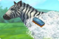 Play Feed Zebra game