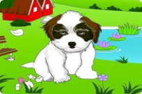 Play Baby Shih Tzu game