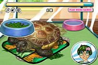 Play Turtle Care game
