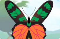 Play Colorful Butterfly Designer game