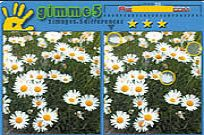 Play Gimme 5 game