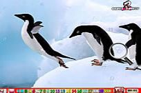 Play Happy Penguin Hn game