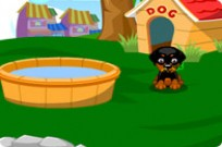 Play Sweet Dog game
